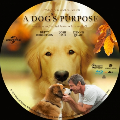 Covercity Dvd Covers Labels A Dog S Purpose
